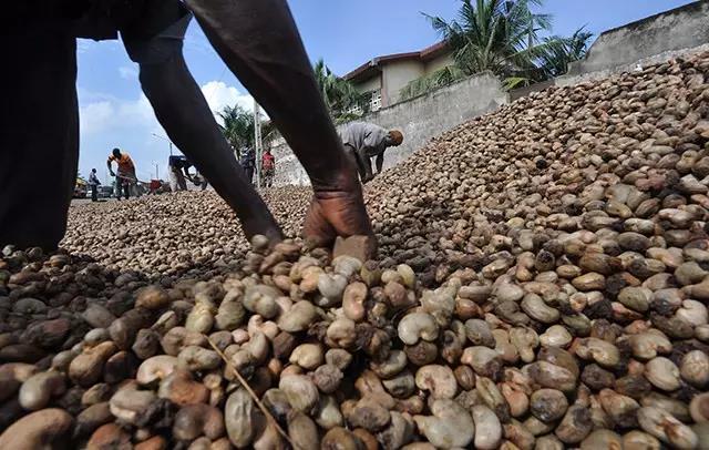 cashew nut origin