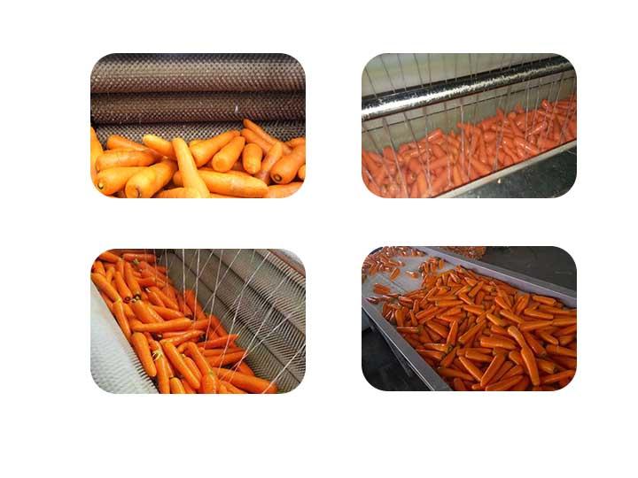 brush carrot cleaning machine