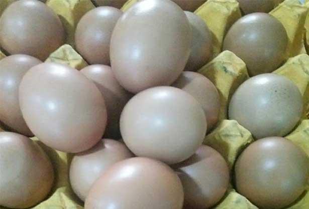 egg spraying machine effect