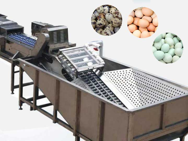 industrial egg washing machine