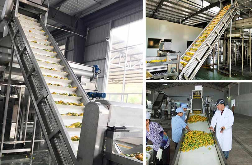 The hoist is used to convey mangoes in the mango juice processing plant