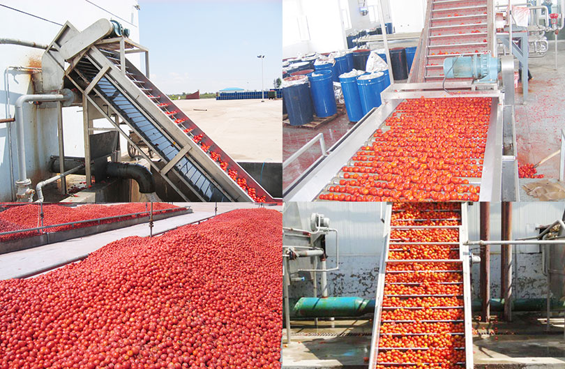 hoist to convey tomatoes