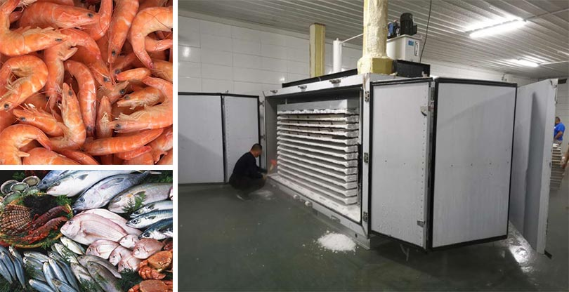contact plate freezing machine application