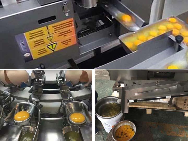 automatic egg breaking machine