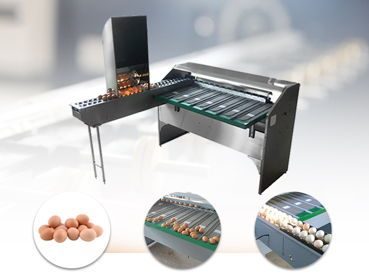 automatic egg grading sorting machine
