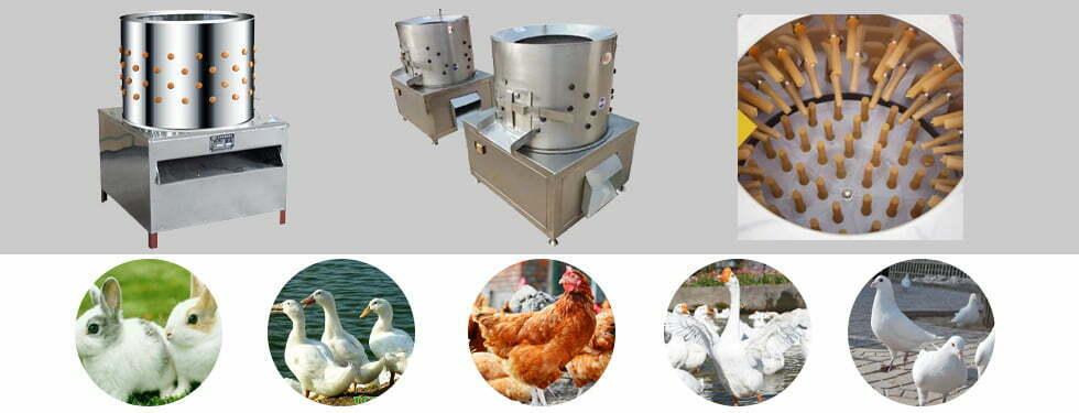 chicken plucking machine application