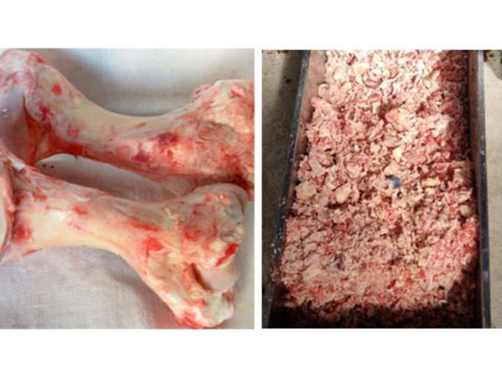bone crushing machine crushing effect